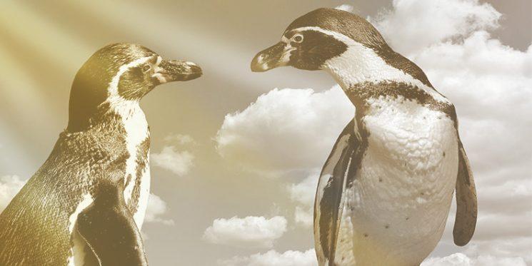 Zwei Pinguine stehen sich gegenüber und schauen sich an